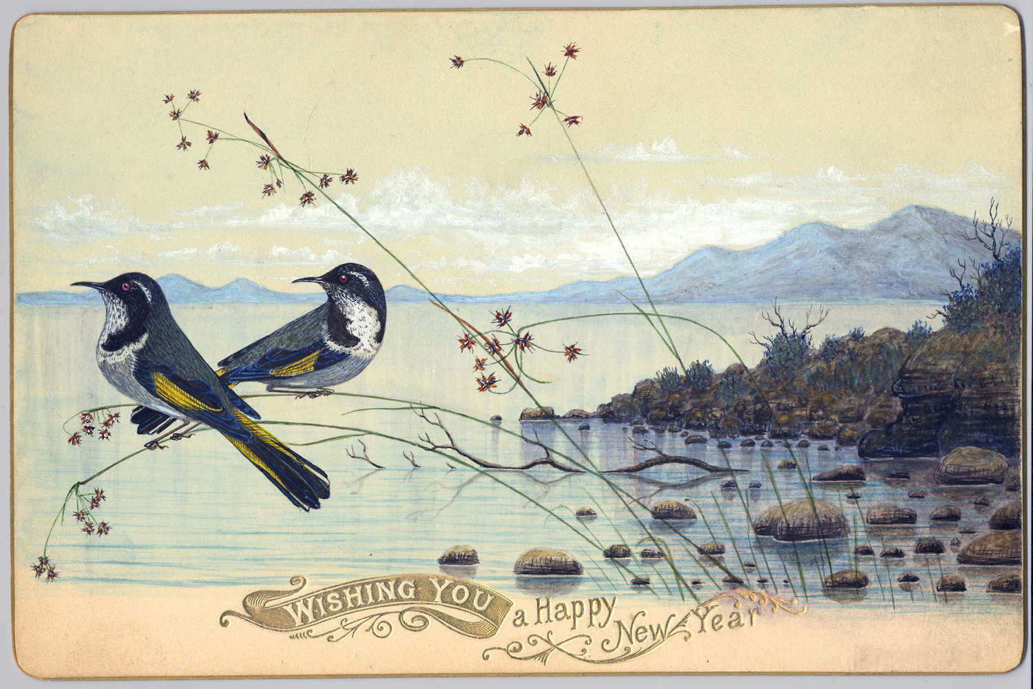 Bird Painting Of New Holland Honeyeaters On A New Years Greeting